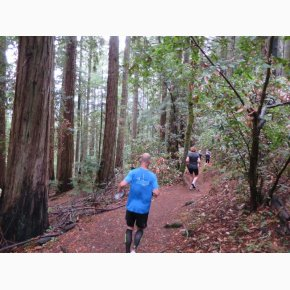 RUN the Canyons Løberejser, Muir Woods National Monument, Californien, September 2017